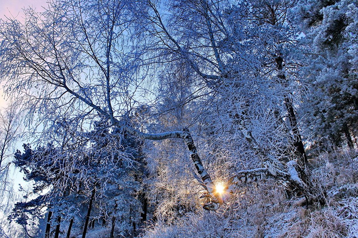 картинки заснеженного леса деревья в инее нижних конечностей флегмоны