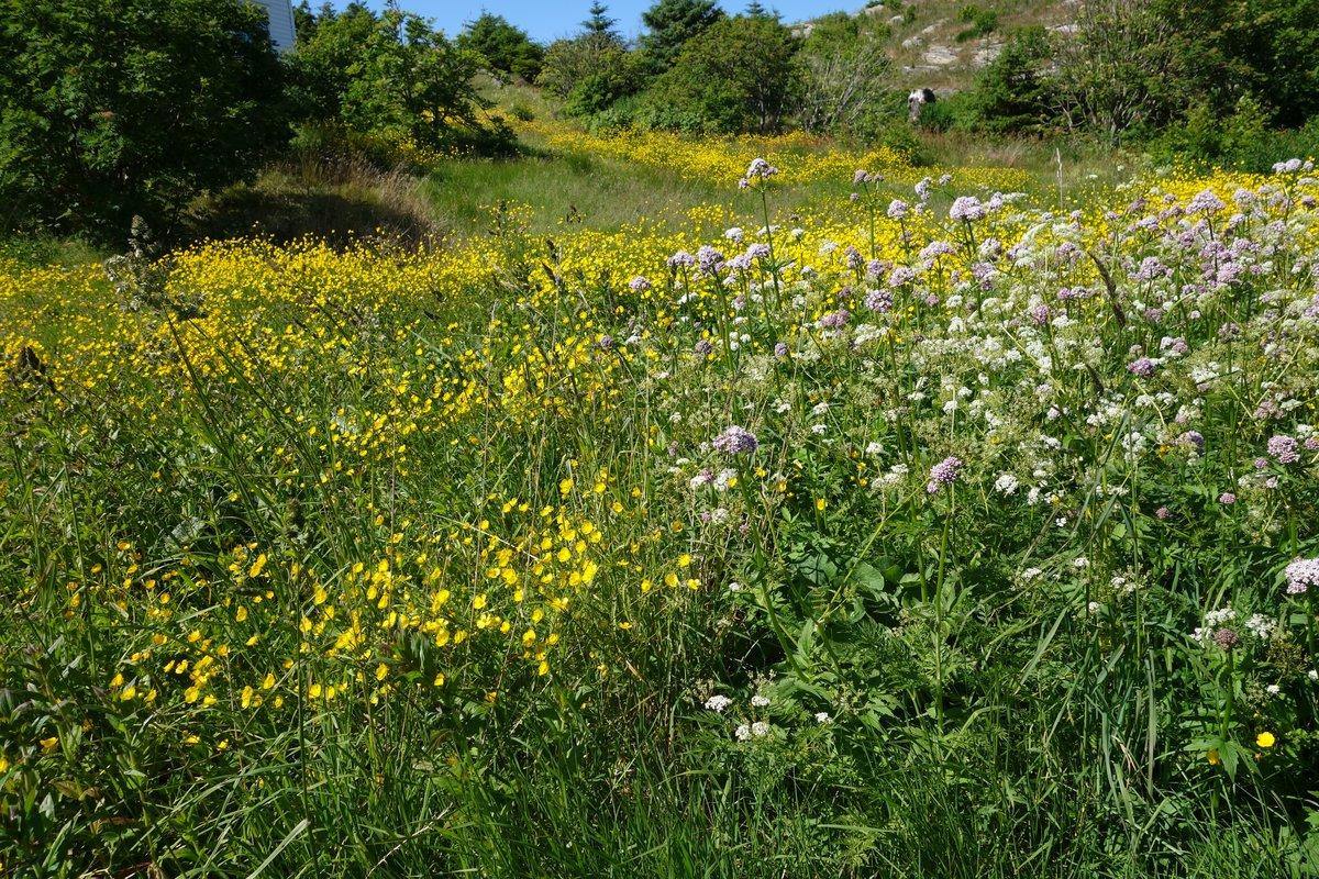 тех картинки дикорастущих трав сорт нашем