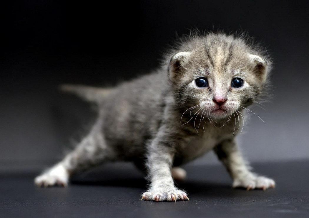 Картинки смешно котенок