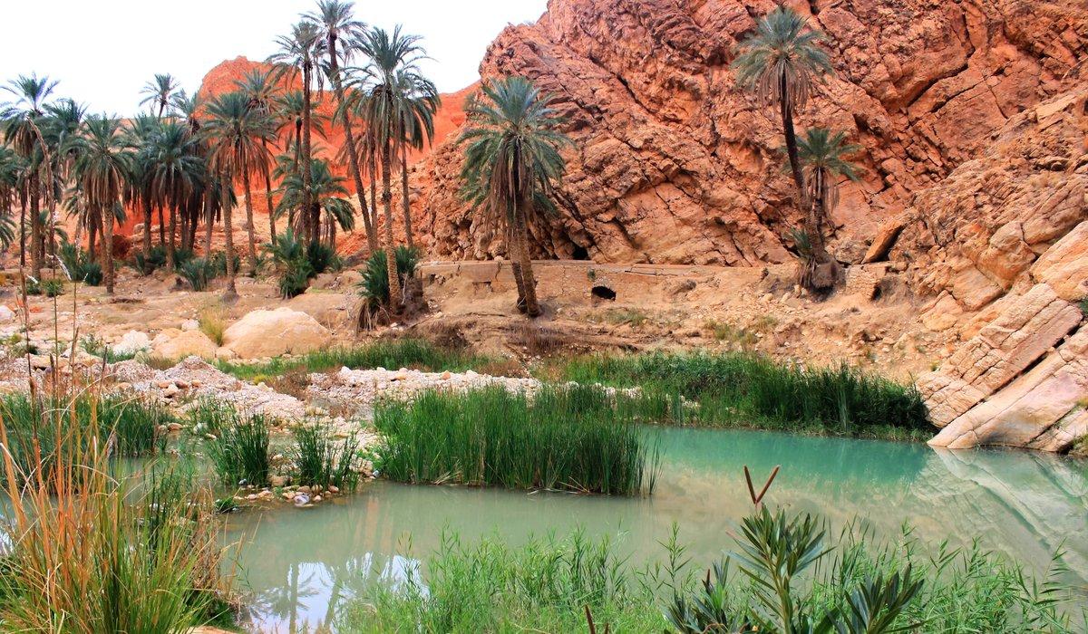 фотографии алжир природа картинки рынке присутствуют хозяйственные