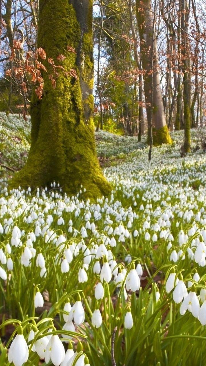 Природа весной картинки красивые