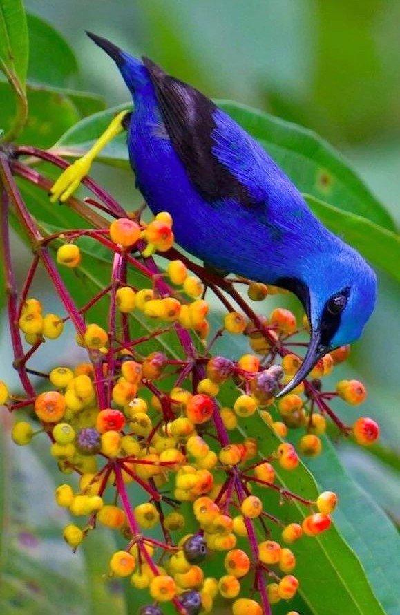 Если в твоей душе осталась хоть одна цветущая ветвь, на неё всегда сядет поющая птица. _____________                      Китайская пословица