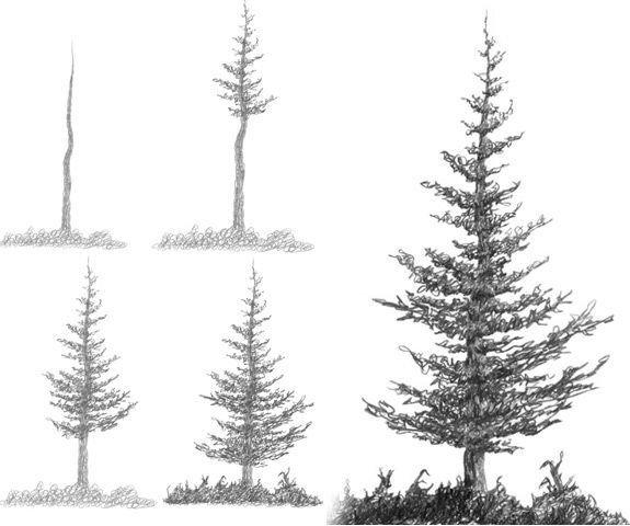 Елка дерево рисунок карандашом