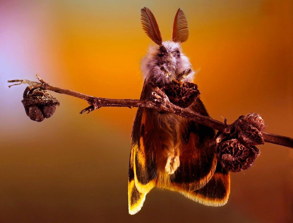 Прикольные картинки насекомыми