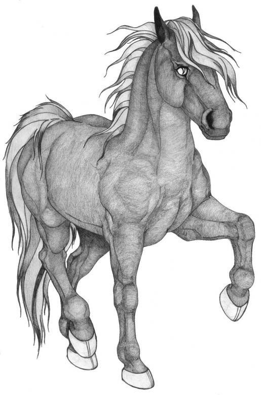 Картинка лошади карандашом, без ссылки прикольные