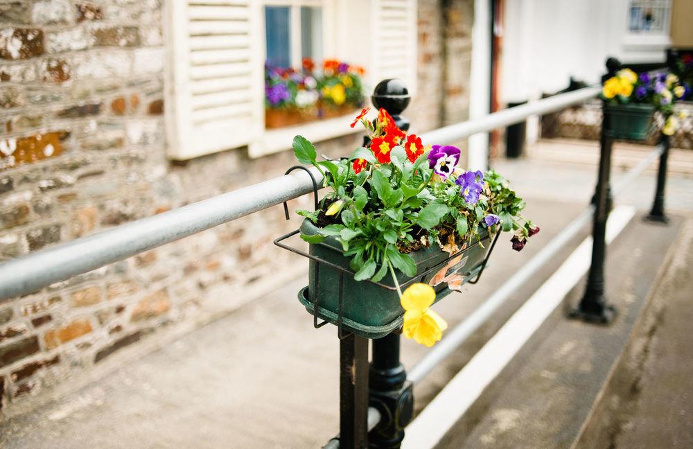 без объектива растения на улицах города фото различными средствами