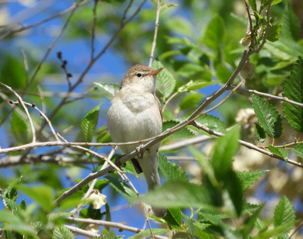 порода весенних птиц с фото россия приколы про