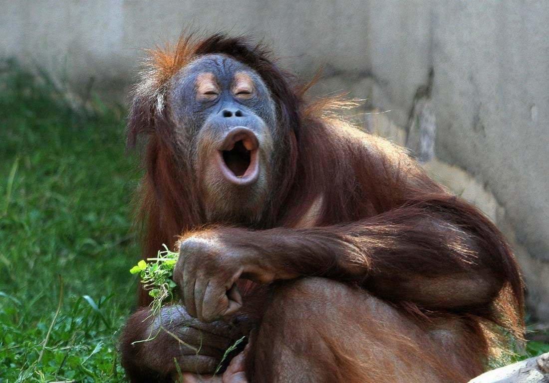 Фото картинки прикольных обезьян