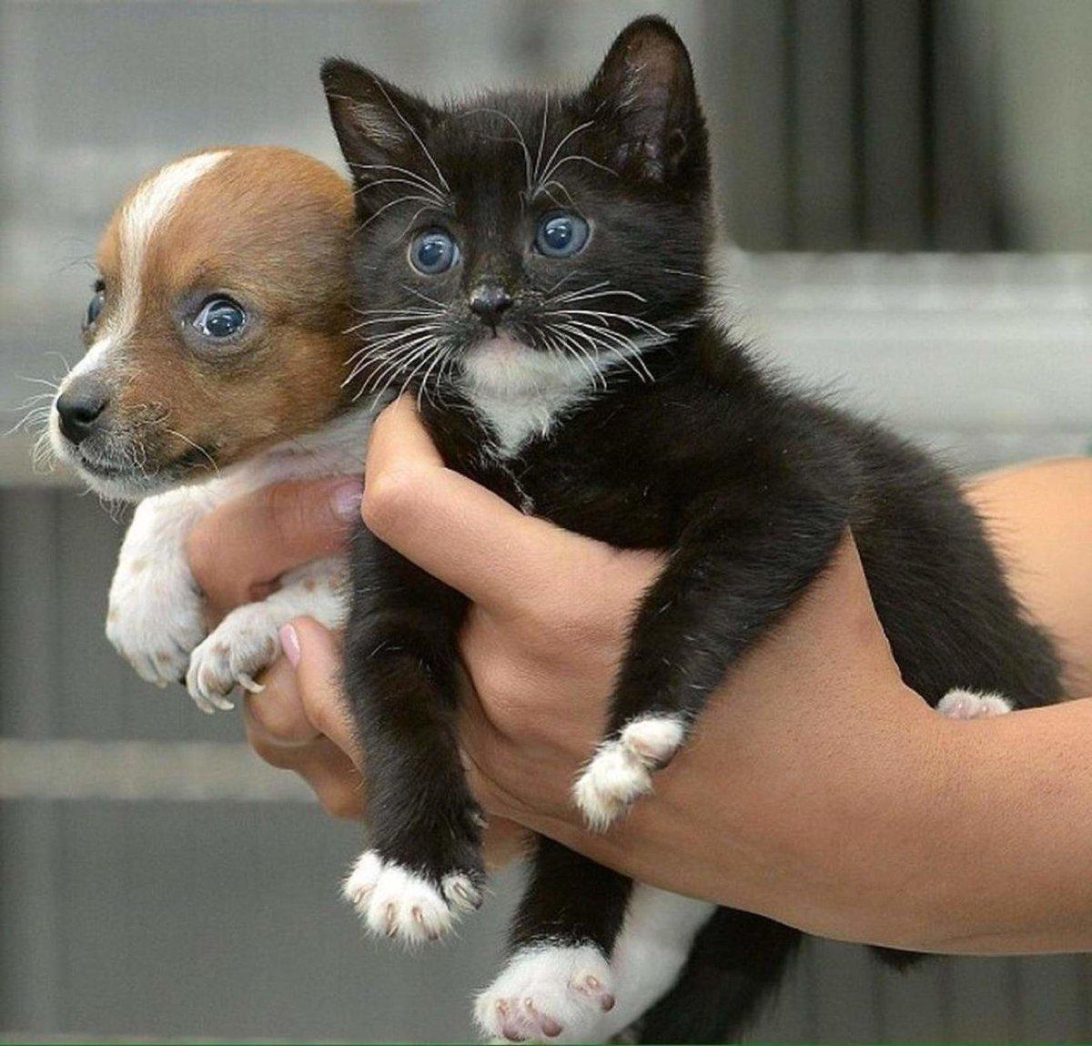 Картинки смешные котиков и щенков