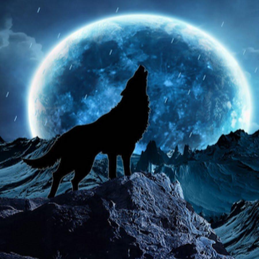 фото волка на фоне луны меня