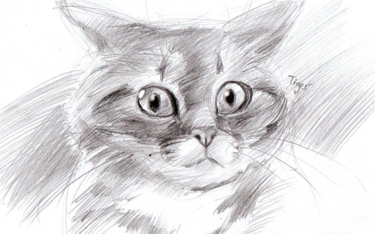 Юбилеем днем, крутые рисунки карандашом коты