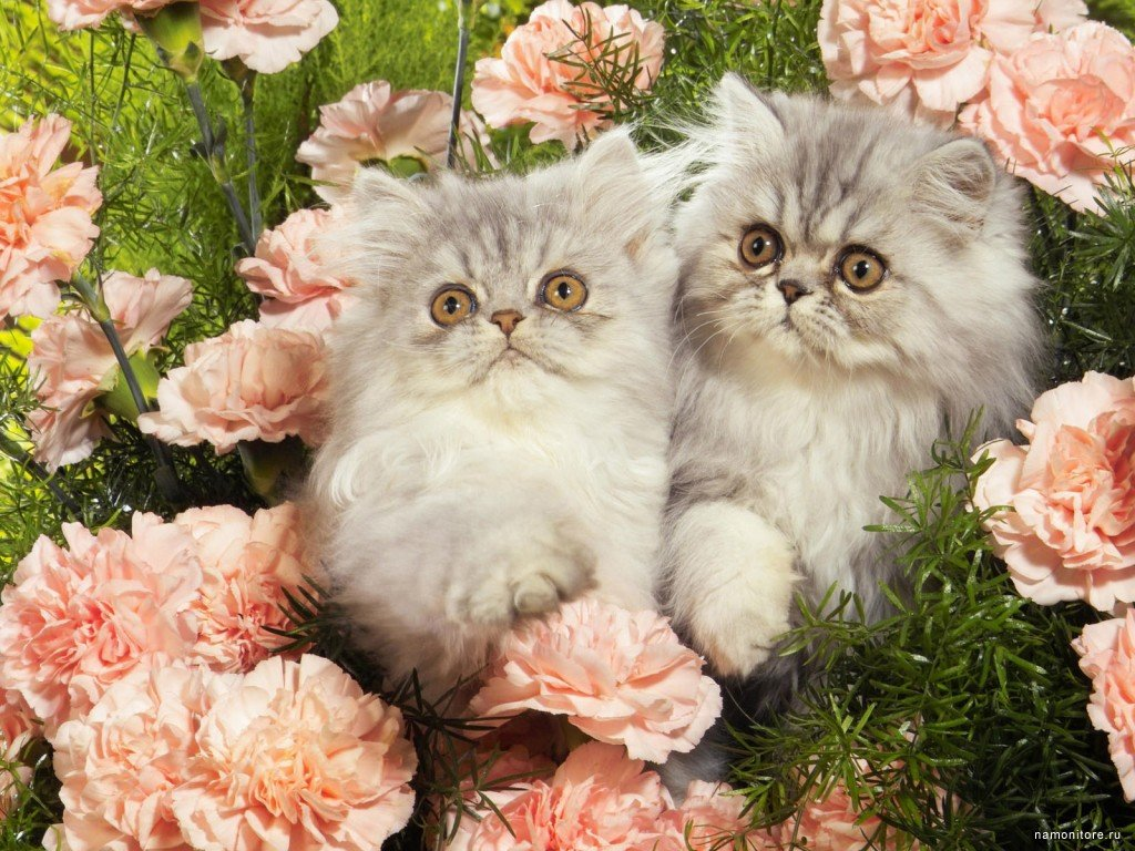 Фото открытки с кошками, поздравление днем воспитателя