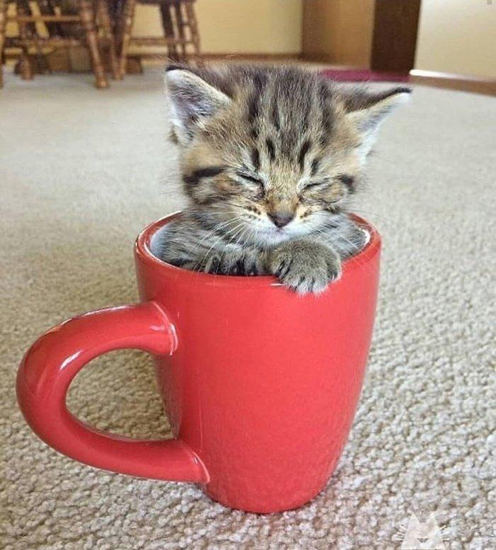 «Лапушка #котенок_в_кружке #милые_котята #kitten #funny ...