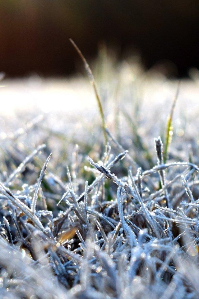 Вторника картинки, картинки иней на траве
