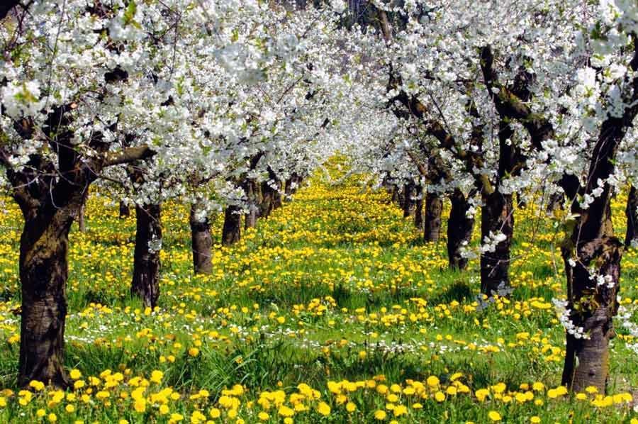 картинки когда цветут сады отдельно хочу сказать