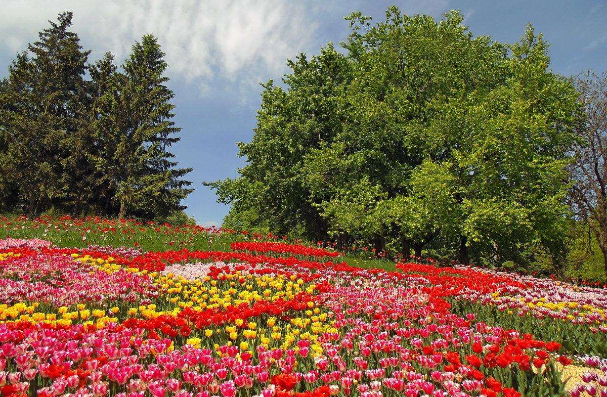 Поляна с цветами картинки, марта