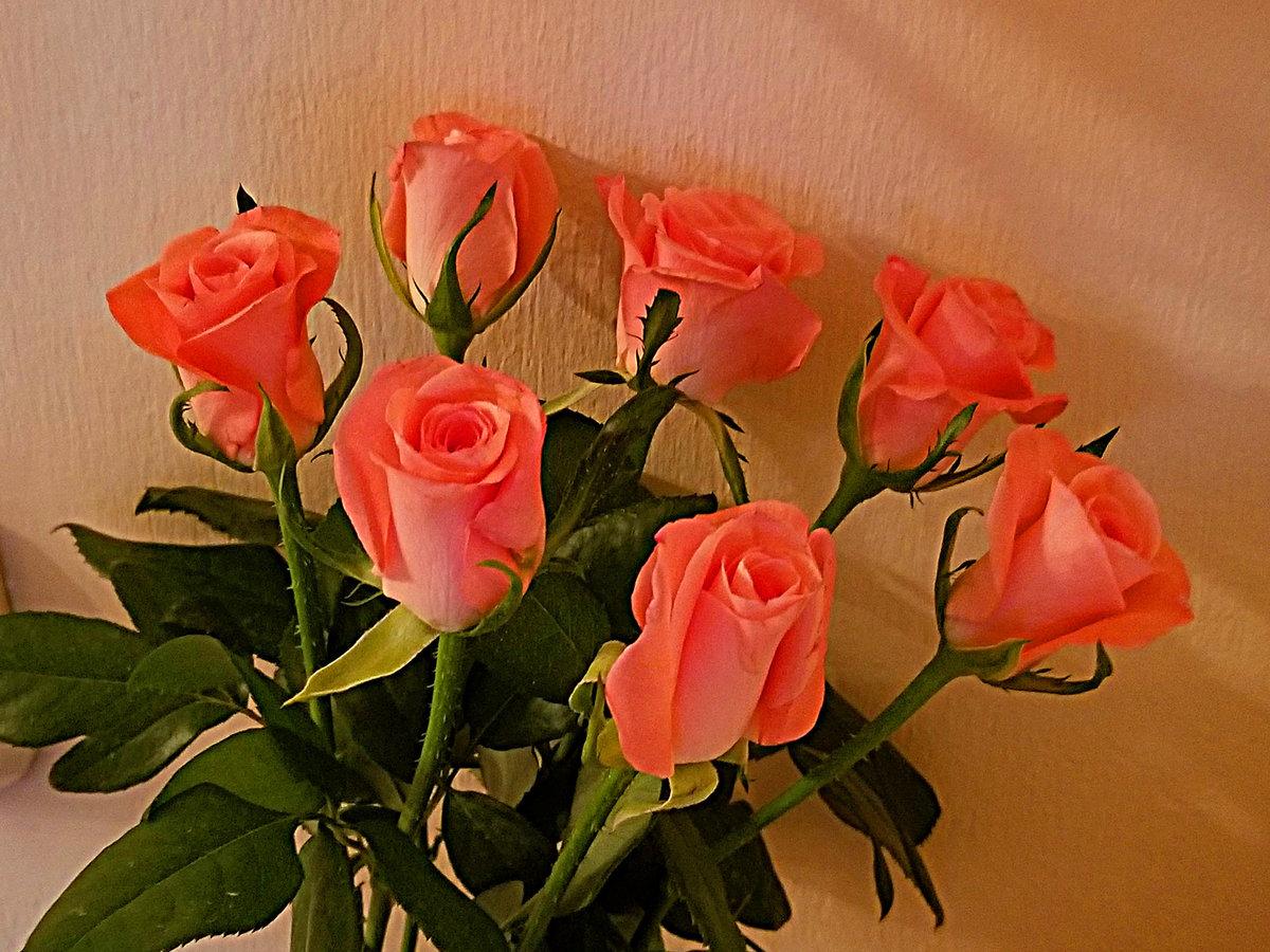 цветы для светланы картинки приспособления обычно