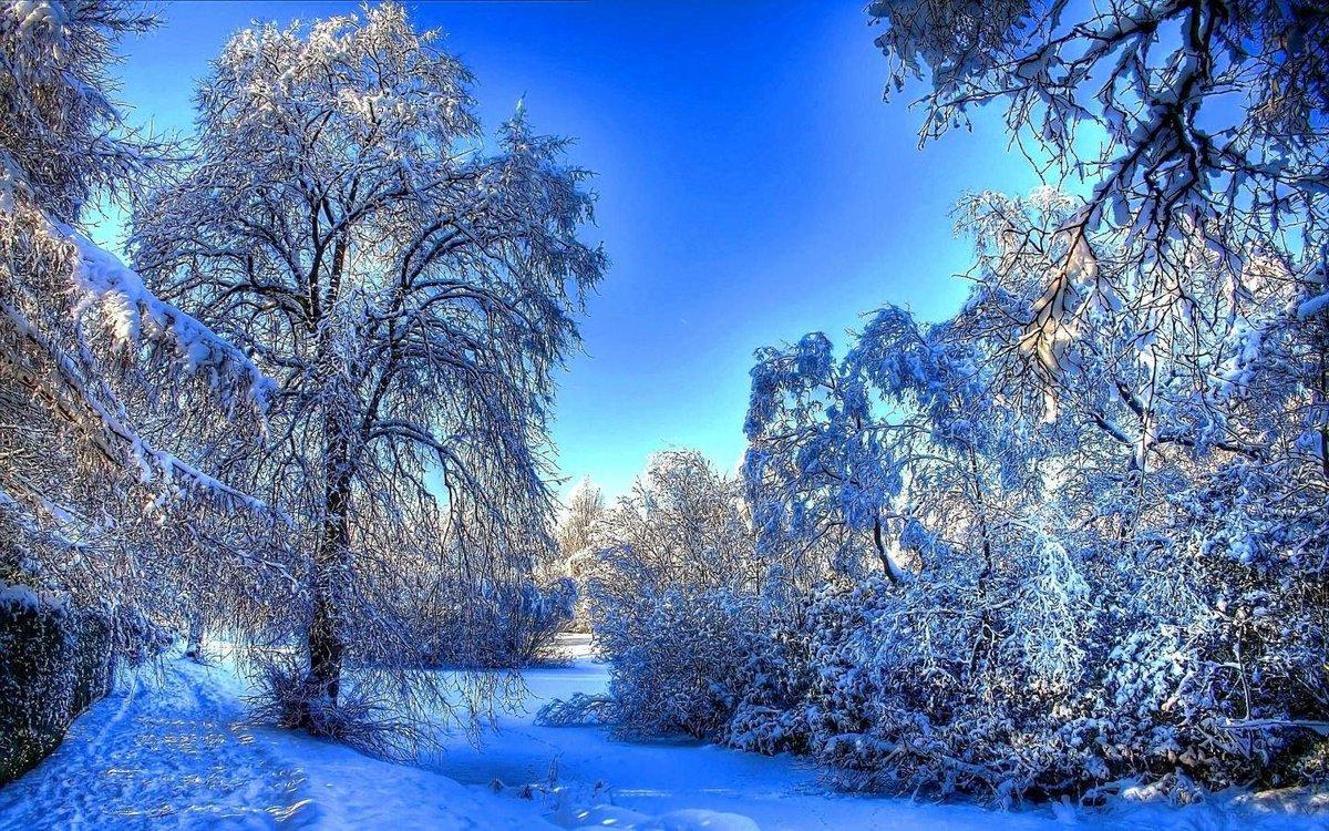 Днем, новогодние картинки с природой