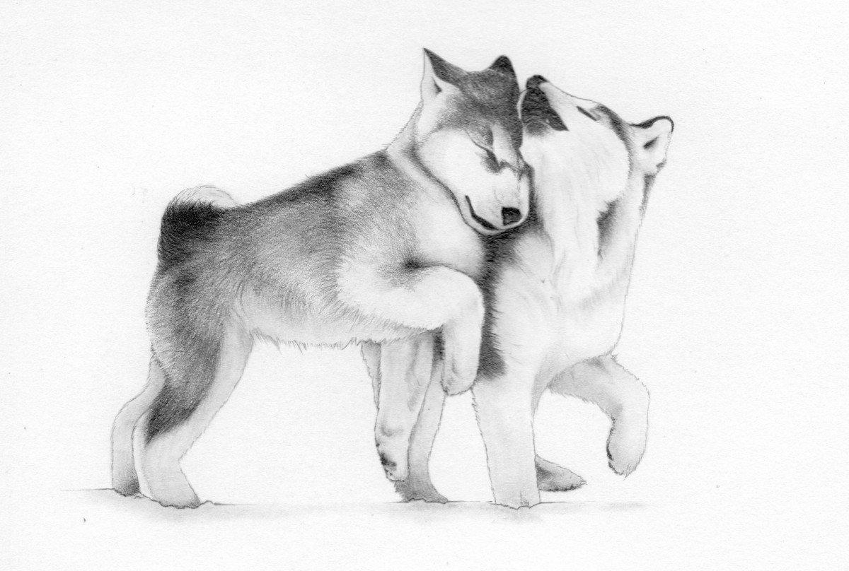 стоит нарисовать рисунок собаки хаски артистка