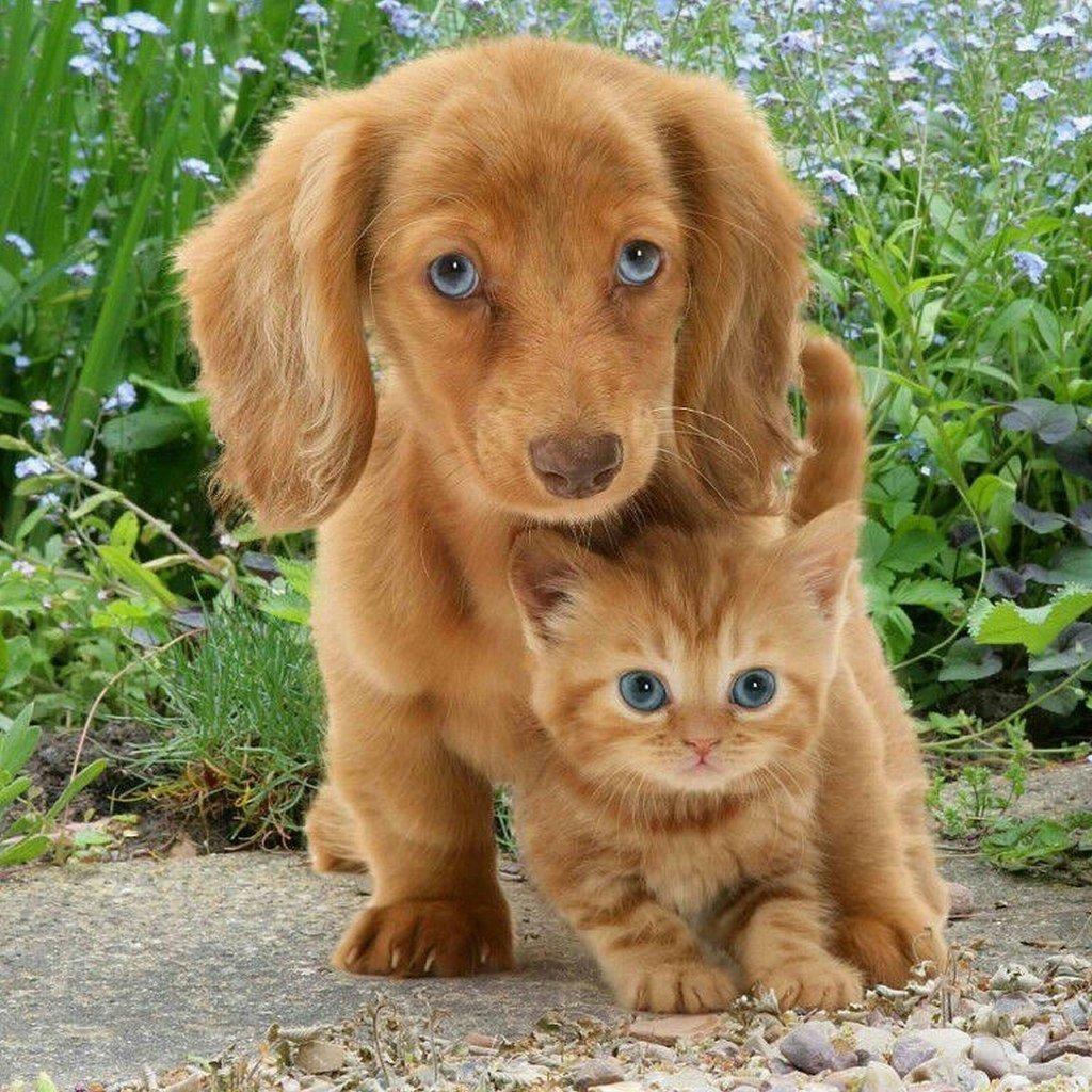 Сотрудникам, милые котята и щенки картинки с надписями
