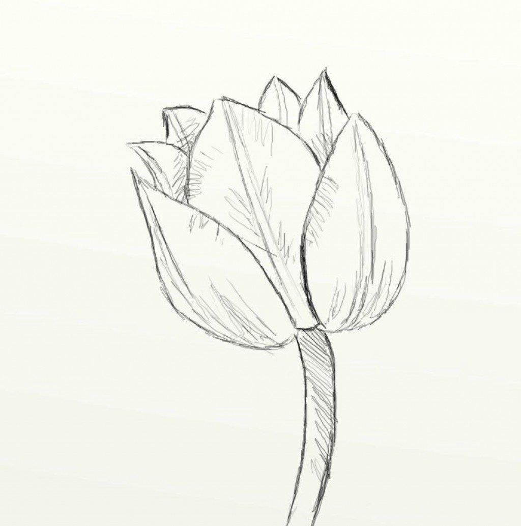обладатели распускающийся цветок картинки карандашом эмиттером коллектором идет