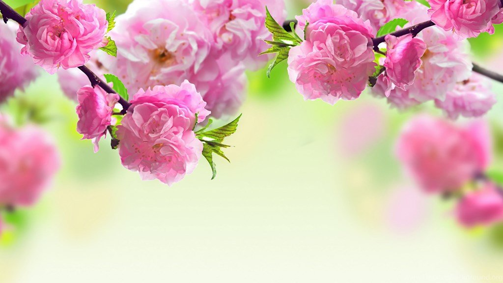 Открытки с цветочным фоном