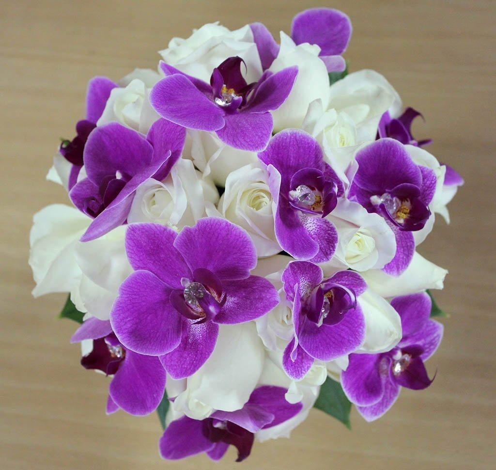 Картинки с розами и орхидеями, картинки лошадиная