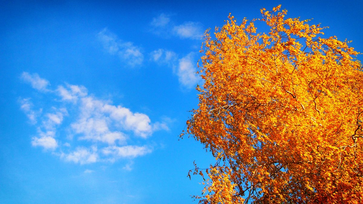 Картинка листья с облаками