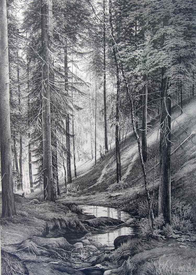 позволяют картинки черный лес карандашом номер
