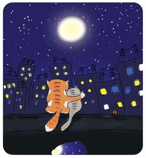 Смешные картинки про ночь и любовь