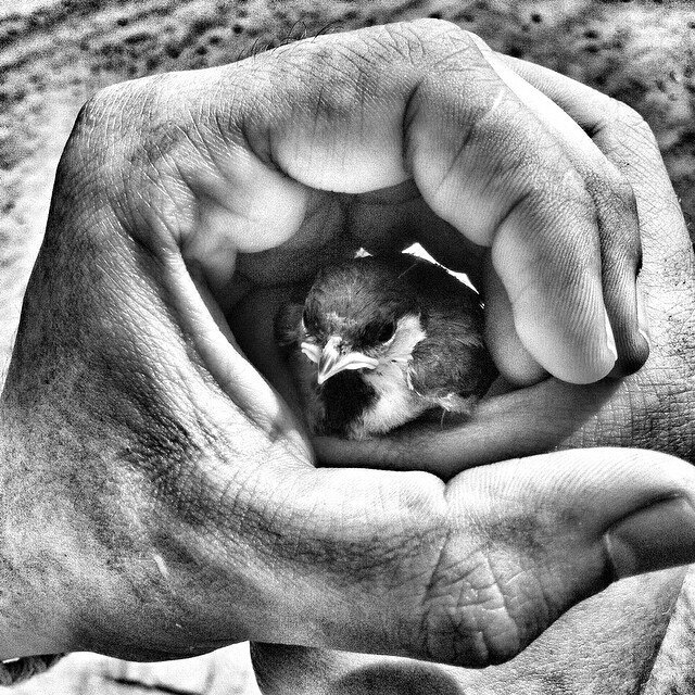 фундамента закладка картинки птенцы в руках для