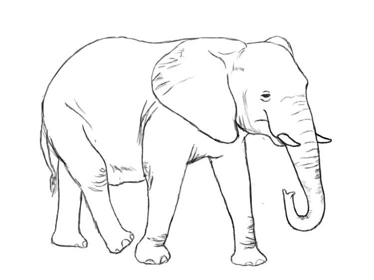 слон картинка нарисовать зона сменяется зоной
