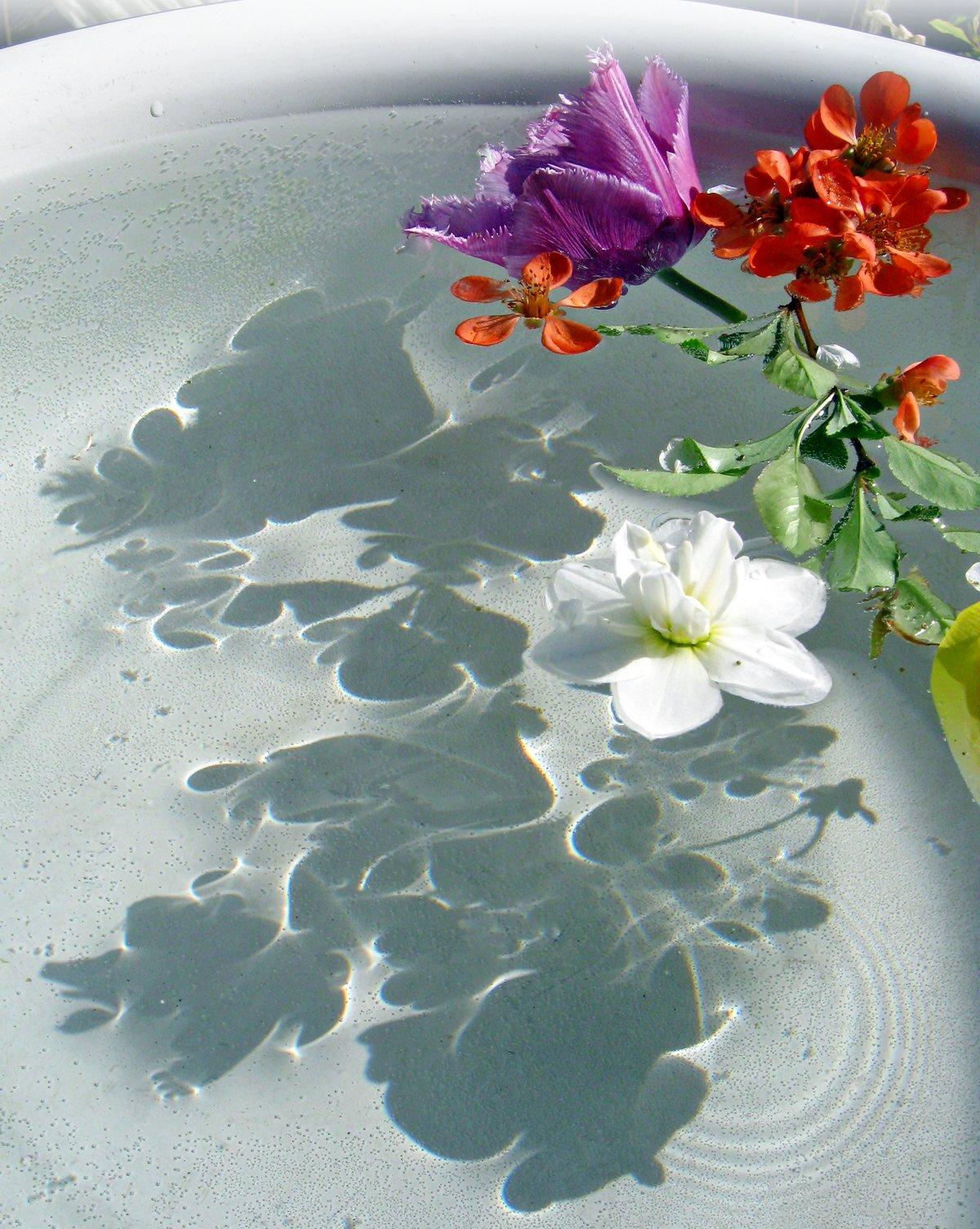 Открытки цветы на воде