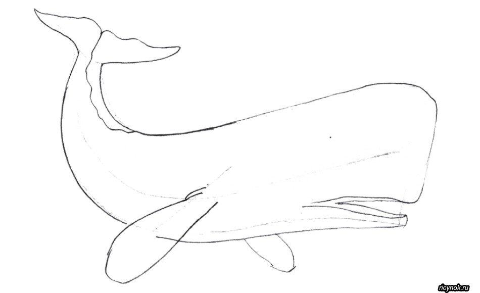 одни синий кит рисунок карандашом поэтапно именно