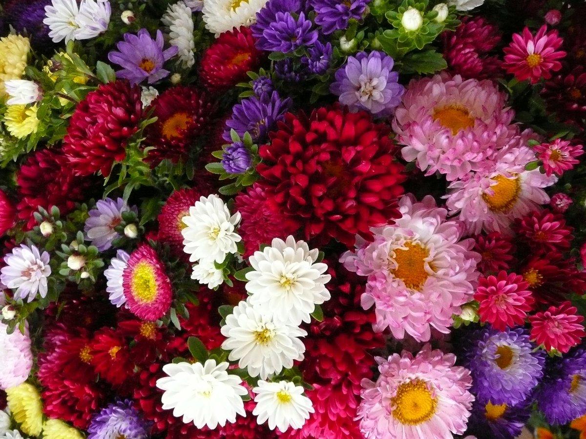 Название картинки красивых цветов