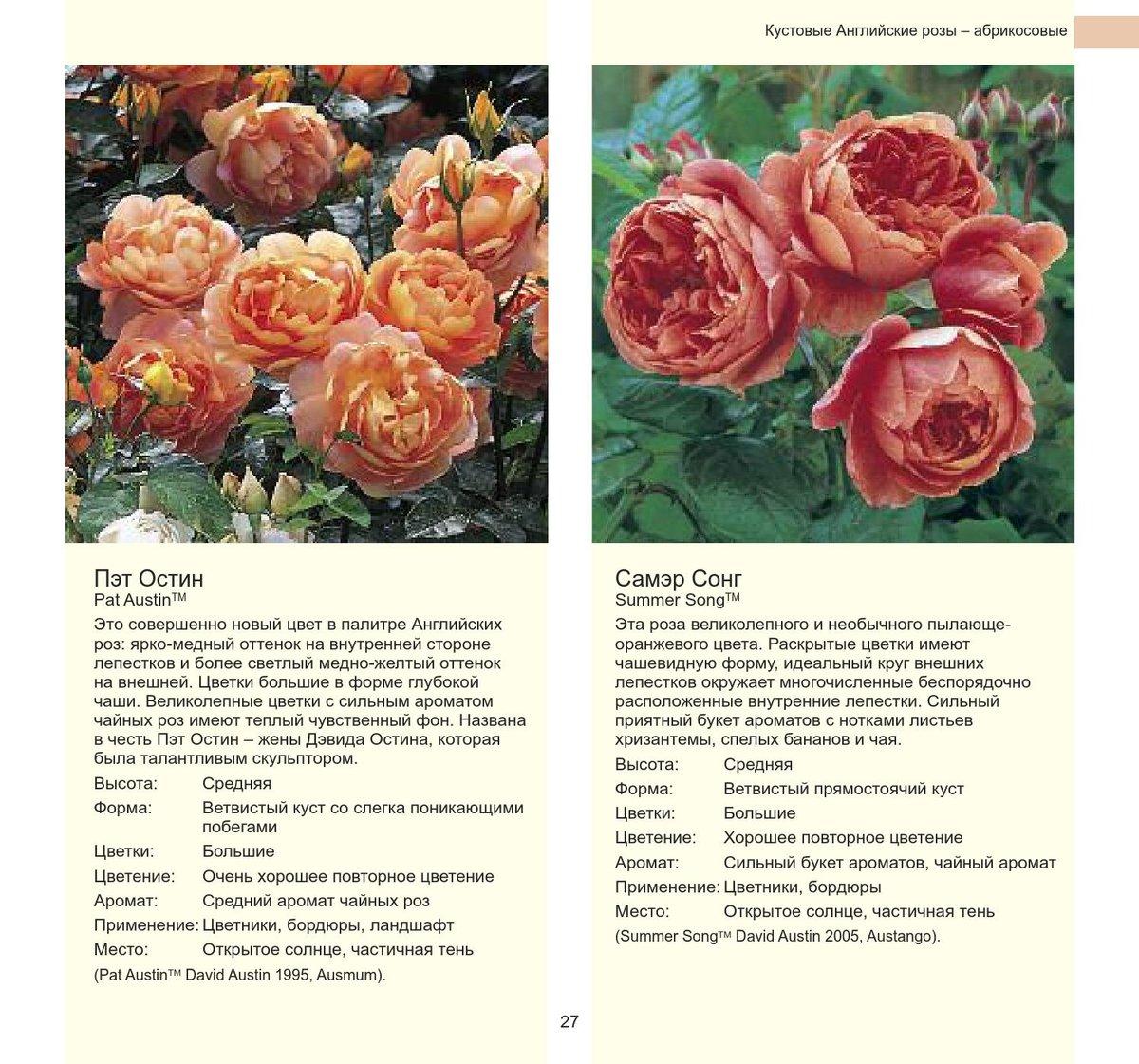 каталог сортов роз с картинками флористика военная