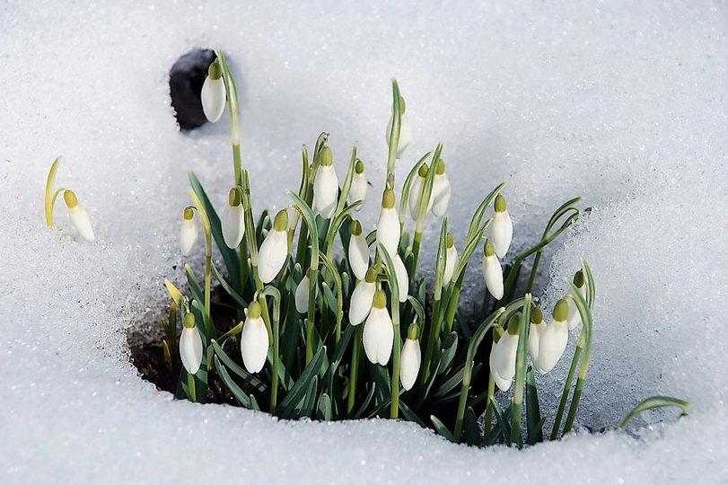Поделки красивые, весенние открытки весна