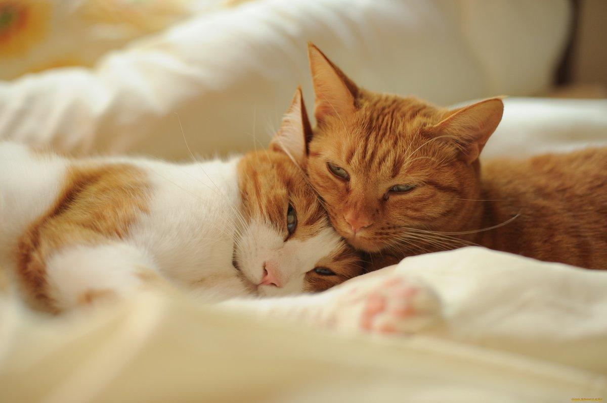 Рождением, картинки спокойной ночи кошка