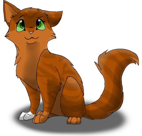 картинки коты воители белка