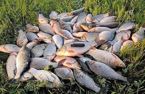 рыбная ловля кружки