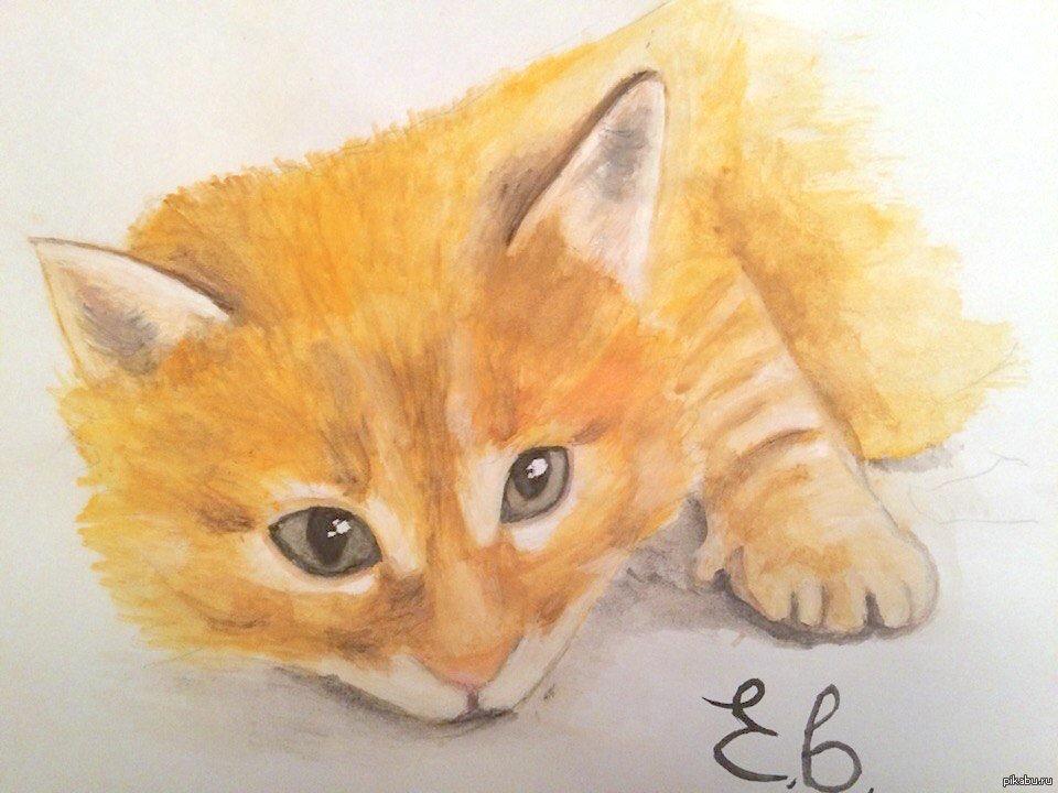 Рисунки кошки поэтапно гуашью программе ребятами