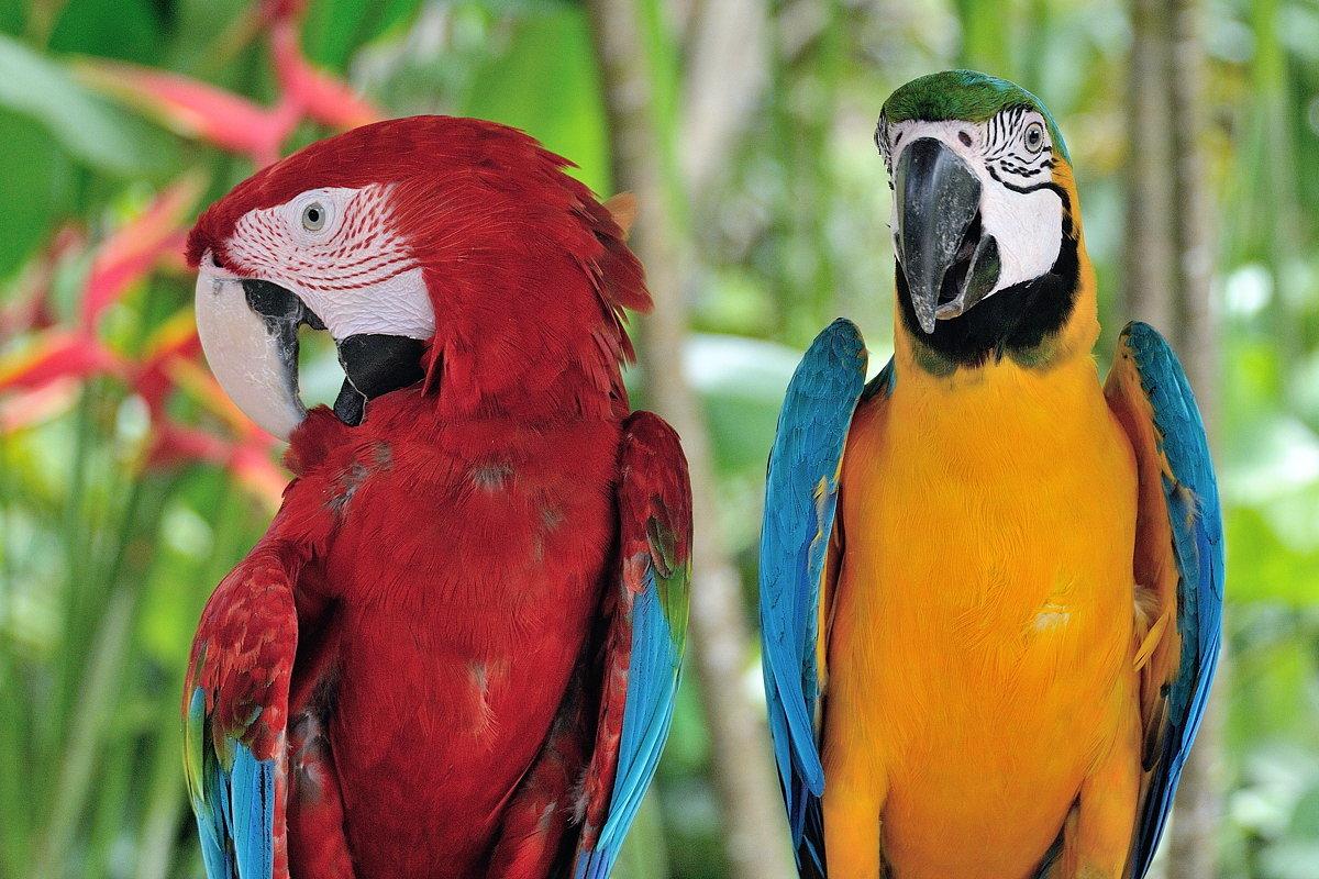 смотреть картинки попугаев всех видов продукты добавлением натуральных