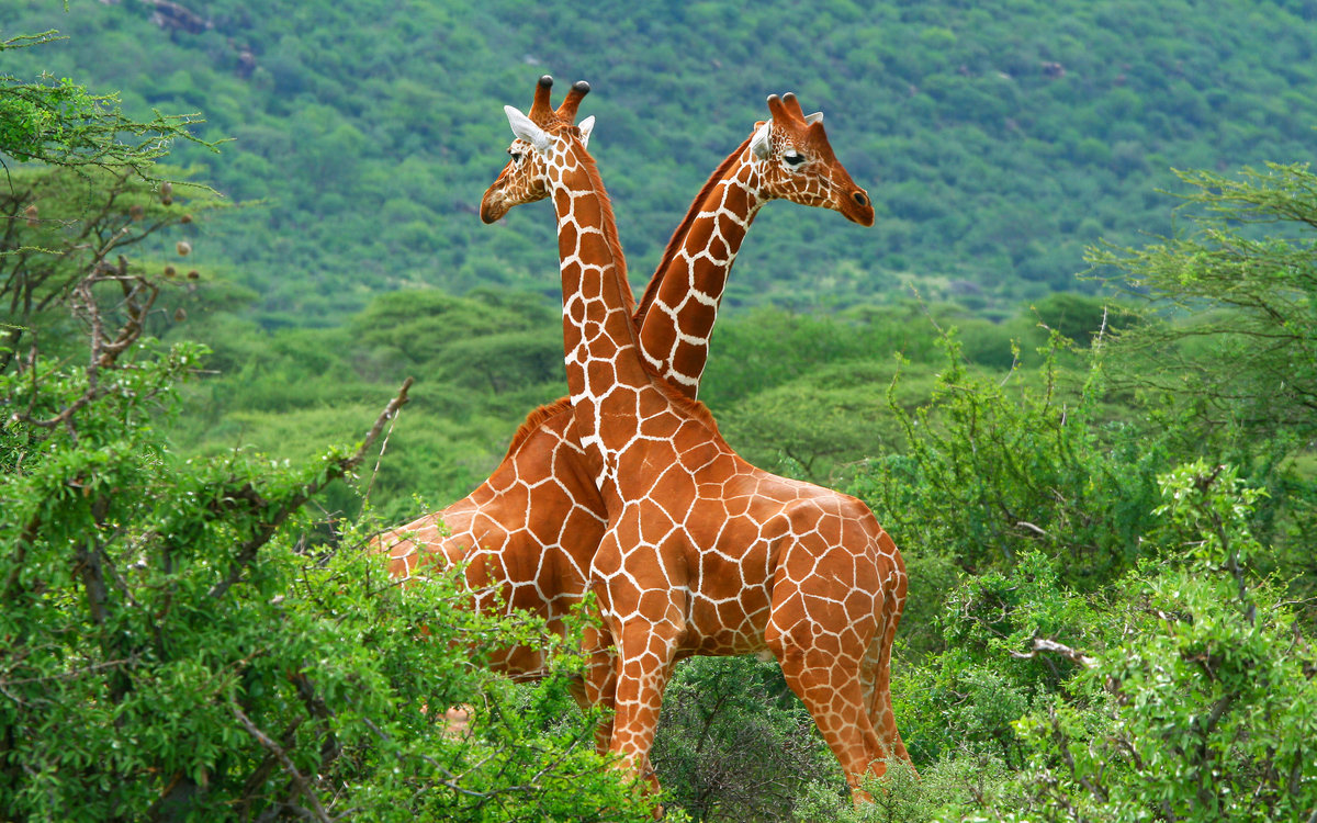 Картинки природа и животные красивые, праздником