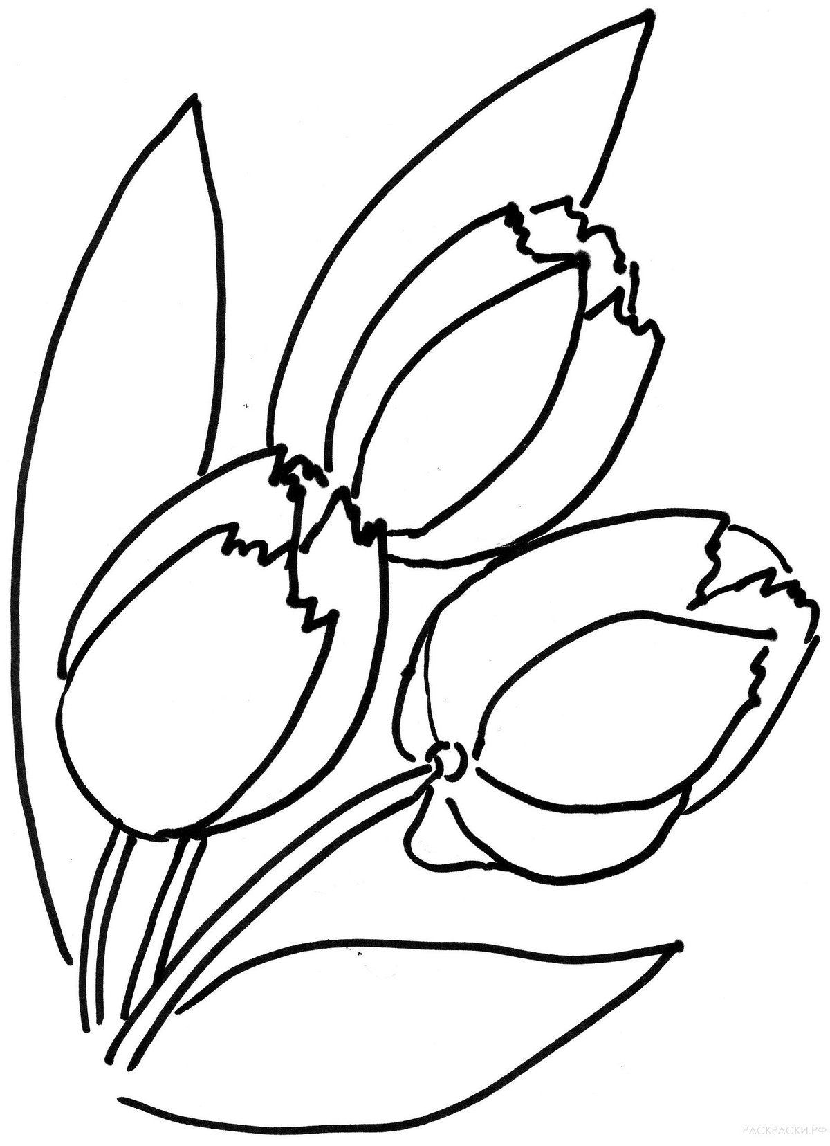 Картинки тюльпаны шаблоны