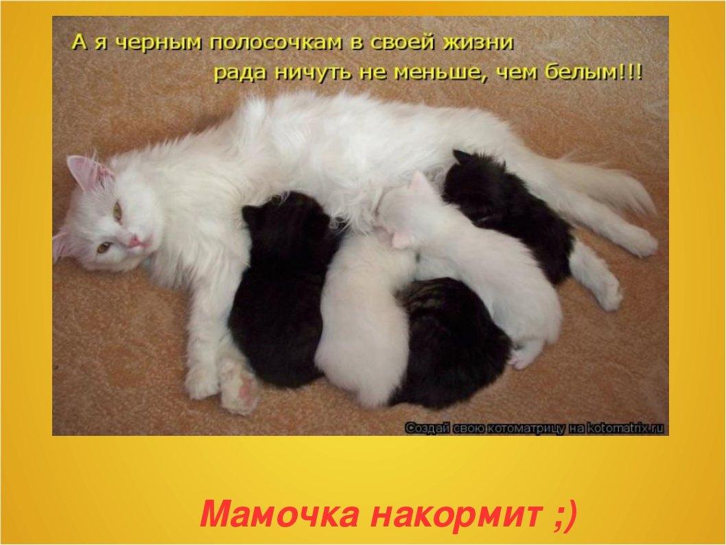 Картинки с надписями кошки о работе, картинках приколы открытки