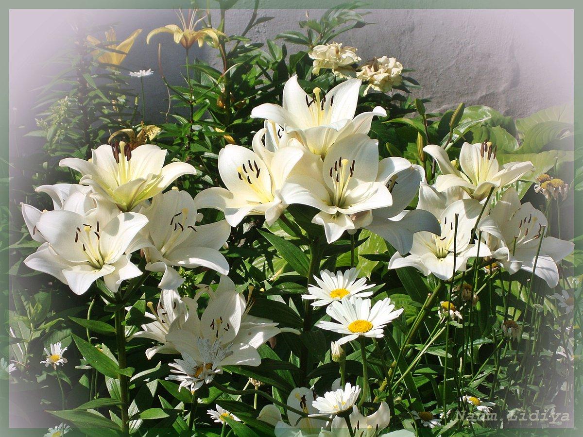Создание картинки с лилиями