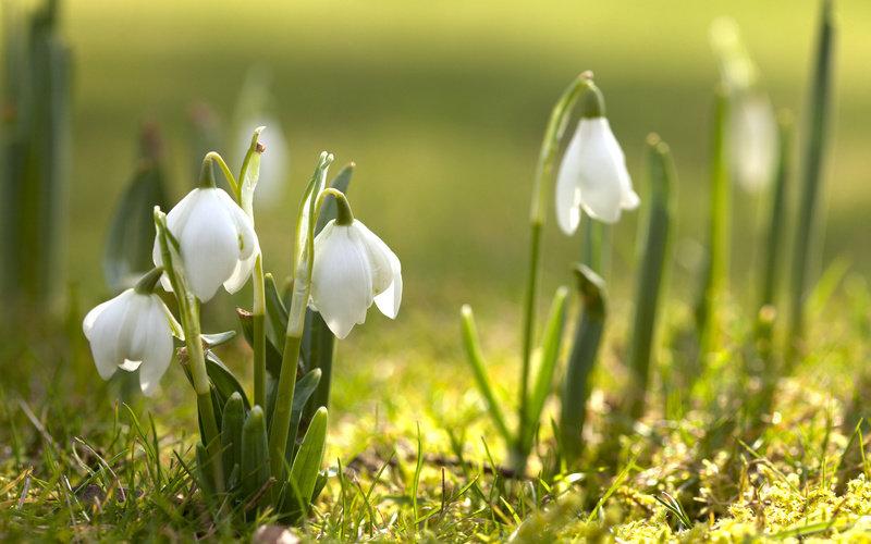 Первые цветы.