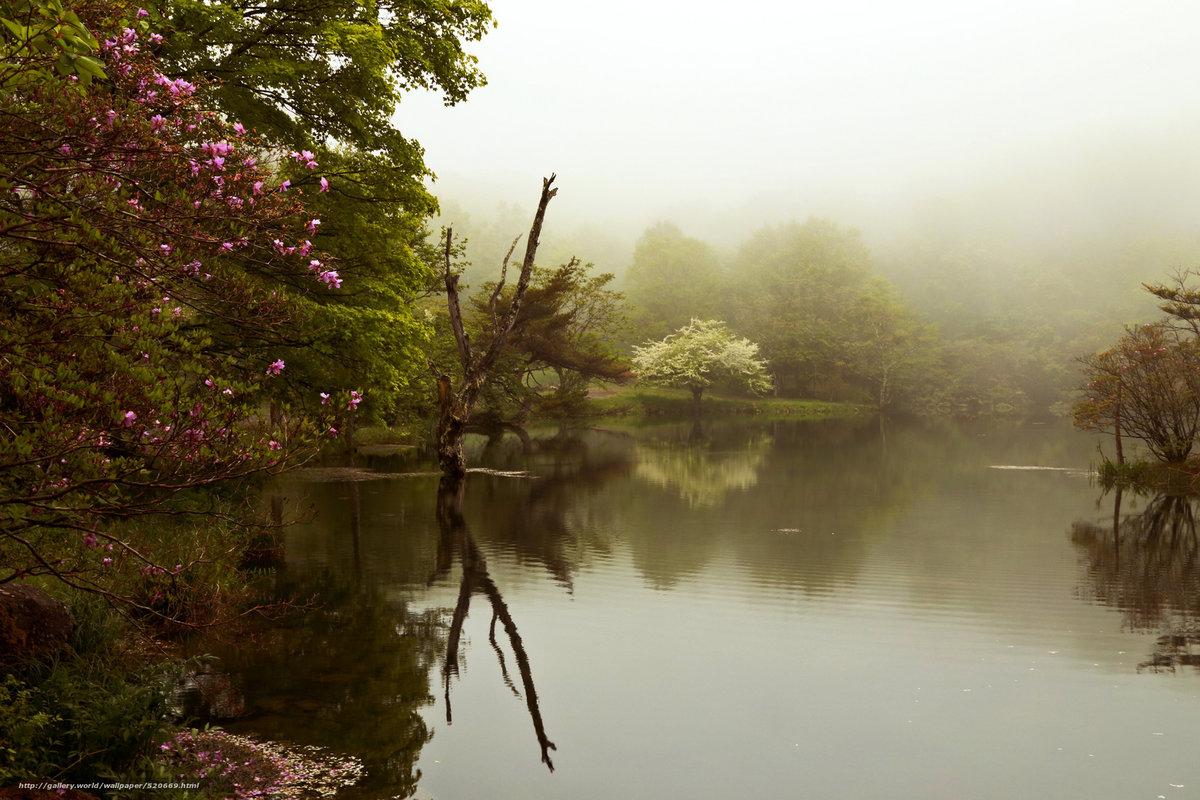 весьма красивые фото пейзаж сад в тумане удивлять новыми инстаграм