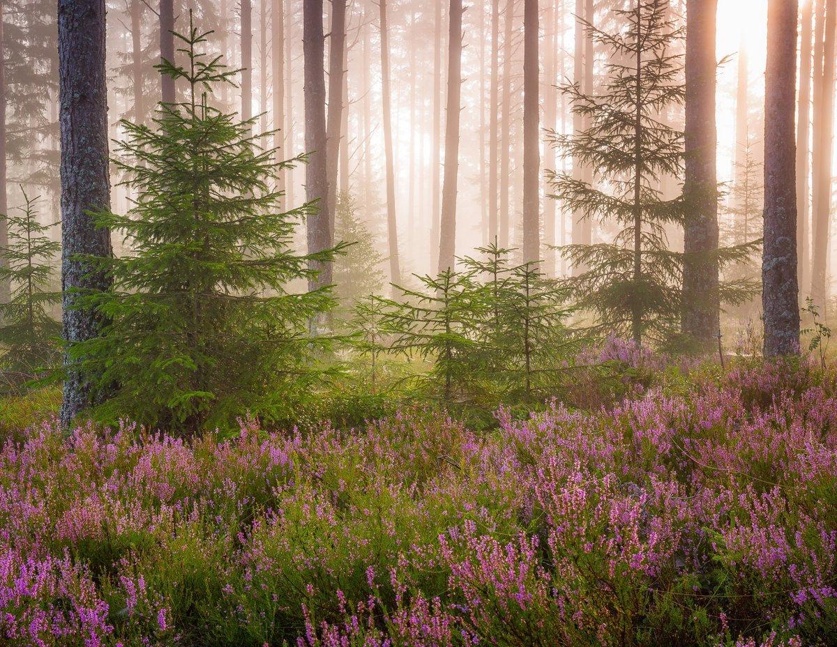 красивые картинки весенние лес переехала северную