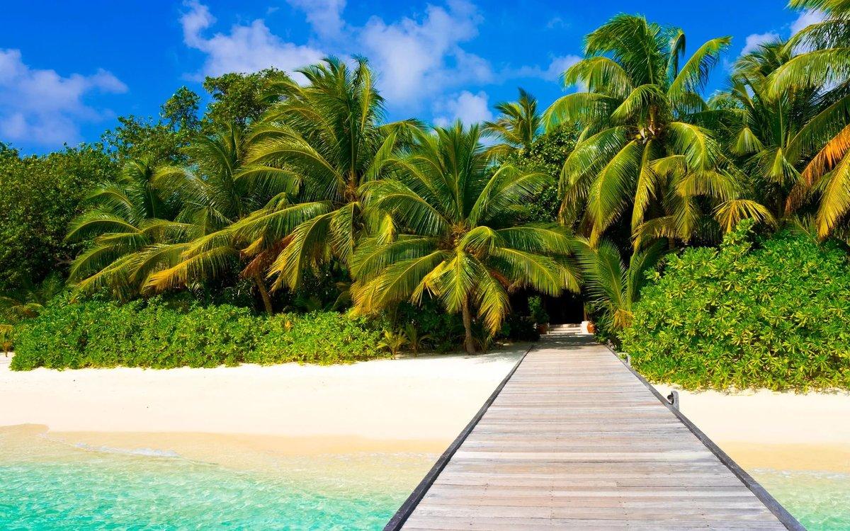 Открытки бабками, картинка острова с пальмой